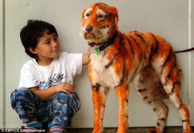 Dona De Petshop Transforma Seu Cachorro Em Tigre E Faz sucesso