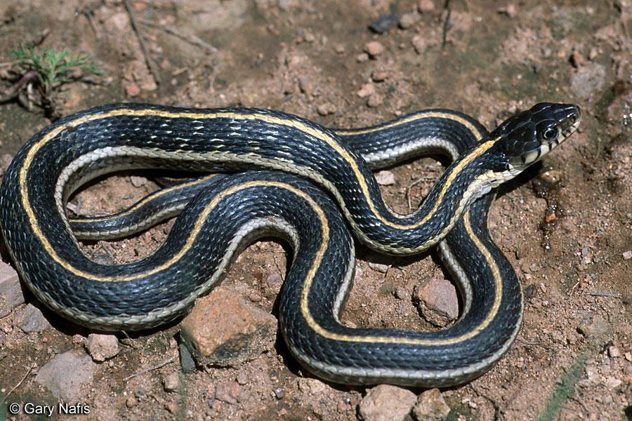 A Orgia das Cobras Enlouquecidas