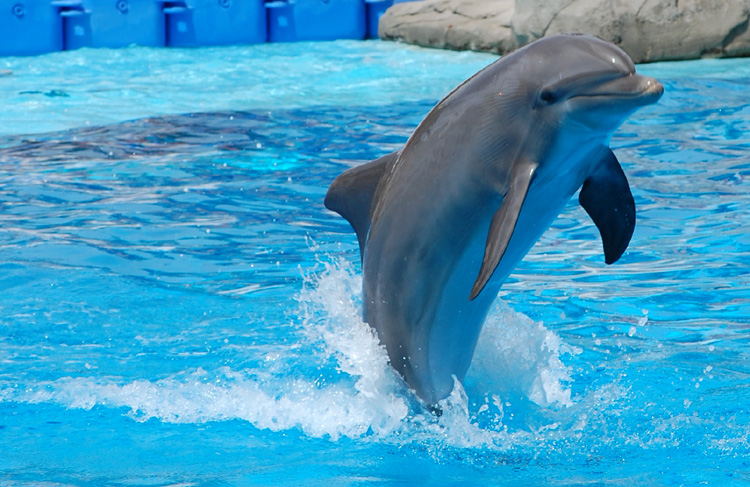 O Apetite Insaciável dos Golfinhos