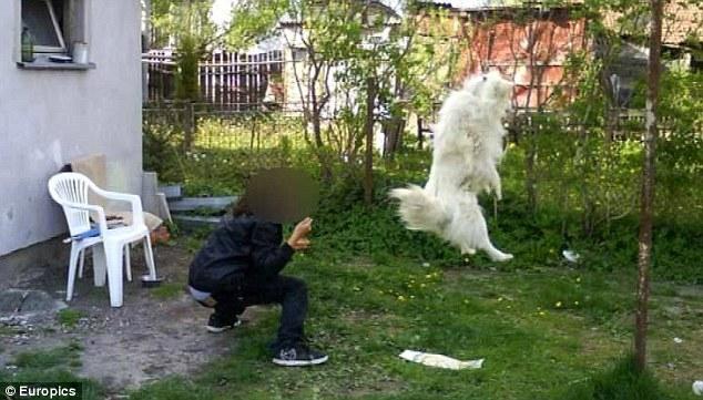 Jovem De 17 Anos Mata O Próprio Cão E Divulga As Fotos Na Internet