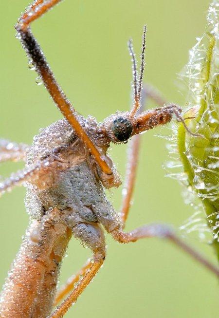 Fotos macro de insetos 10