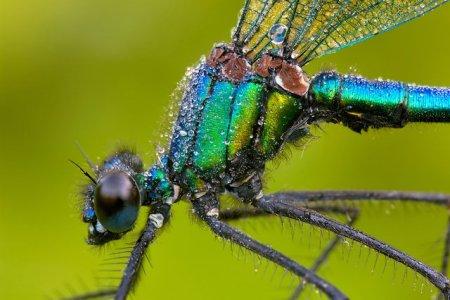 Fotos macro de insetos 11