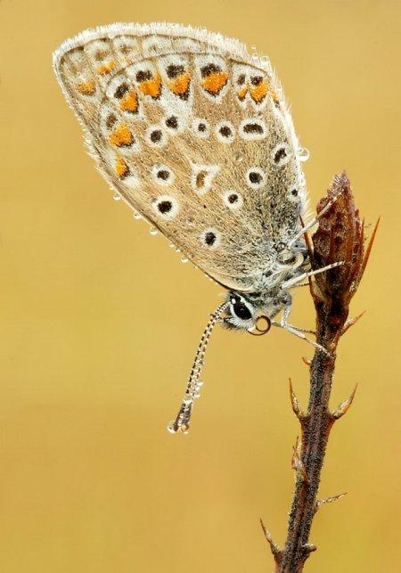 Fotos macro de insetos 05