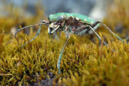 Fotos macro de insetos 09