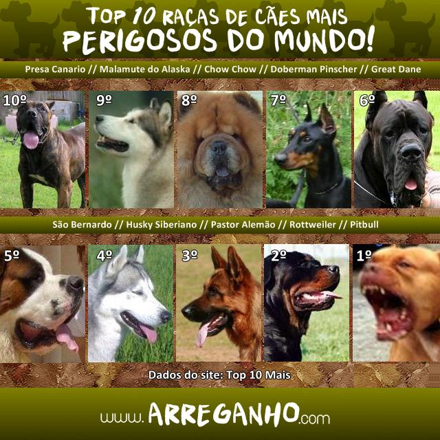 Top 10 raças de cães mais perigosas do mundo