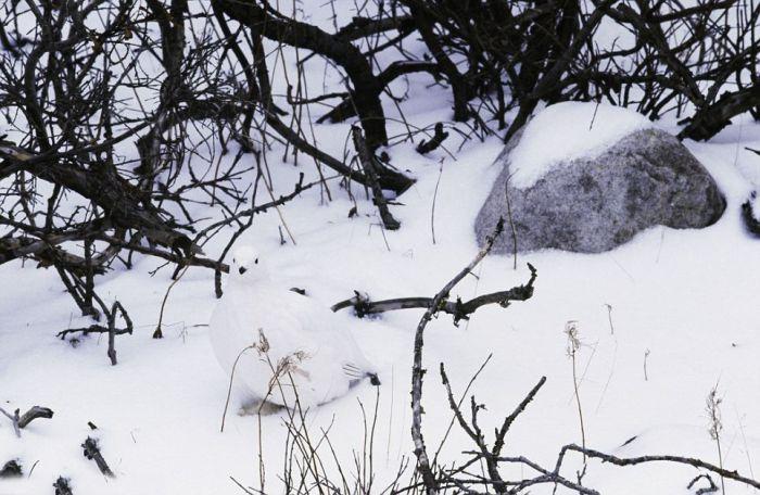 Os mestres naturais da camuflagem