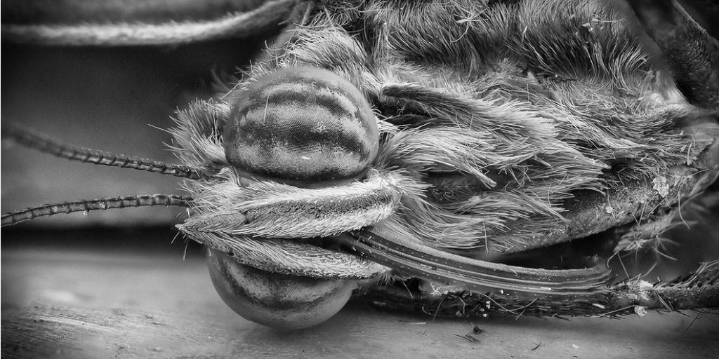10 Coisas Incríveis Vistas Por Um Microscópio