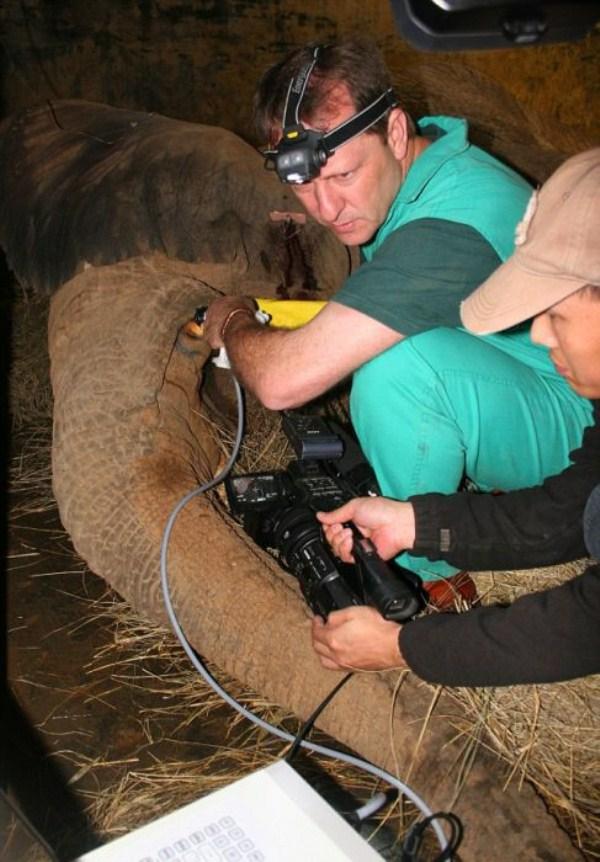 Gerhard Steenkamp, O Dentista De Animais Selvagens