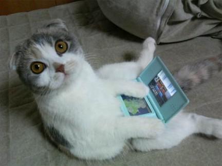 gatos-mortais1
