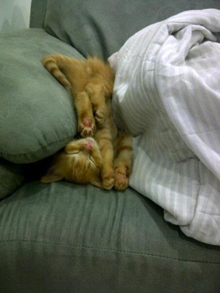 gatos-mortais3