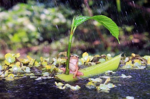 A Natureza Realmente Surpreende