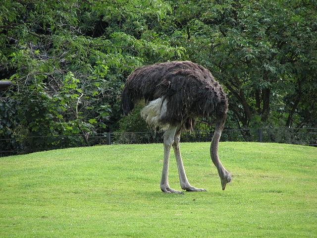 10 Mitos sobre animais que são completamente falsos