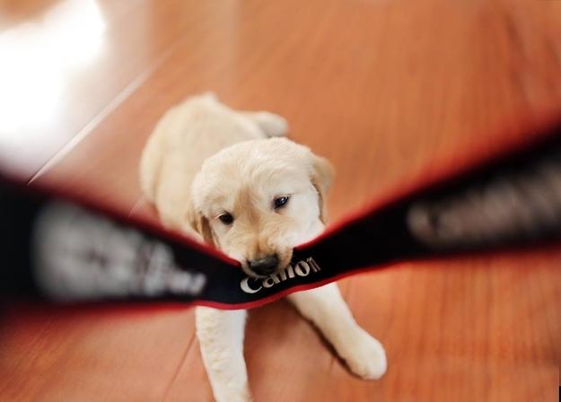 Algumas maneiras de seu cachorro fazer você se sentir melhor