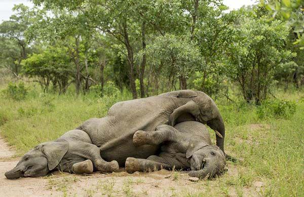 elefante02