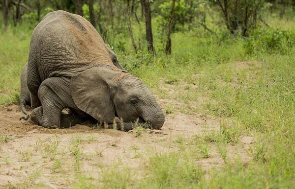 elefante05