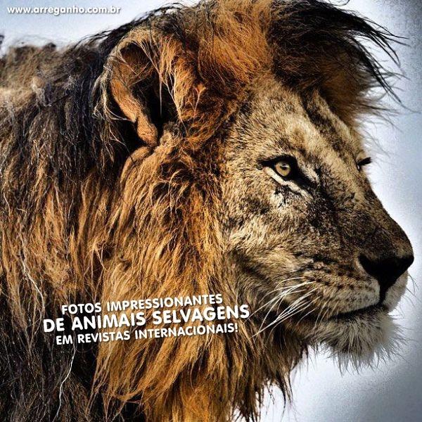 Fotos impressionantes de animais em revistas internacionais!