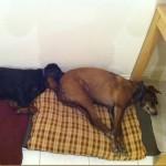 Cachorros dormindo de um jeito diferente