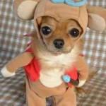 As roupas de cachorro mais engraçadas da internet