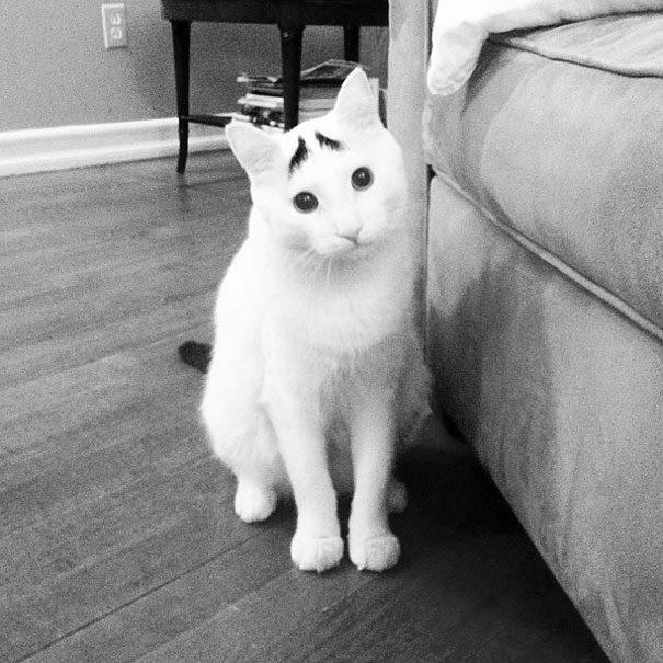 gato01