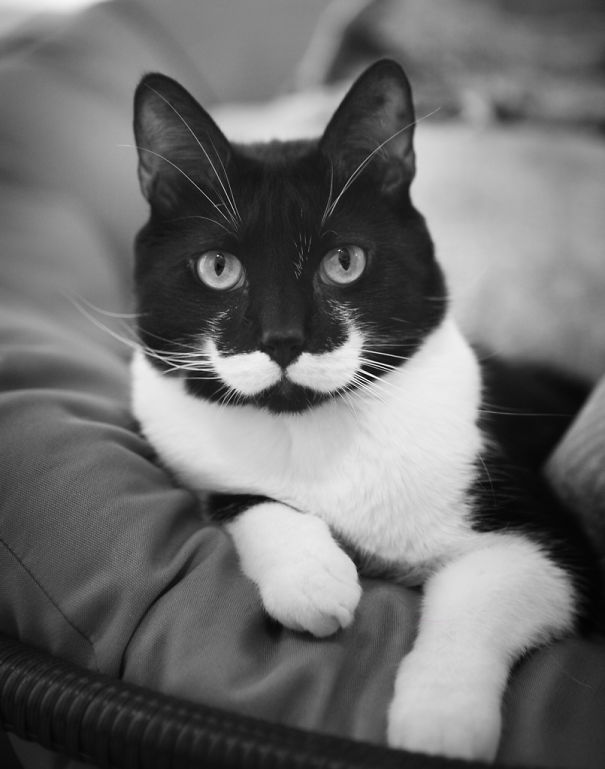 gato05