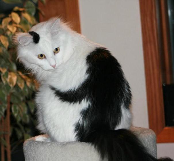 gato09