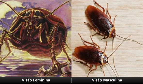 Diferenças entre a visão masculina e feminina!