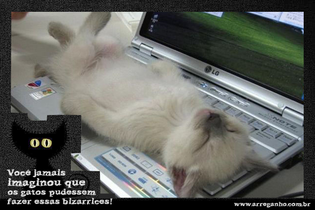 Você jamais imaginou que os gatos pudessem fazer essas bizarrices!