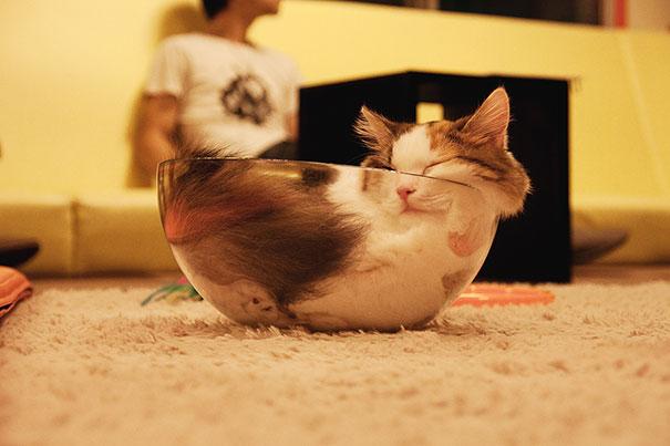 10 Gatos que vão representar a sua segunda-feira!
