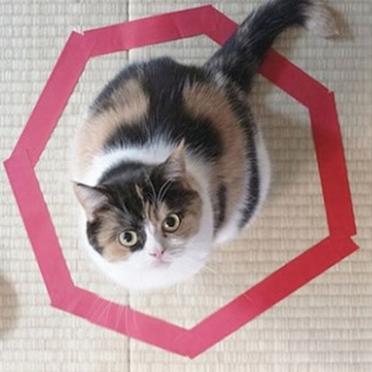 Como prender um gato em 3 passos simples e sem usar a força