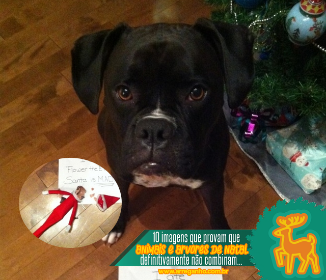 10 Imagens que provam que animais e árvores de Natal não combinam!
