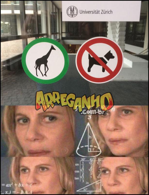 cachorros não entram