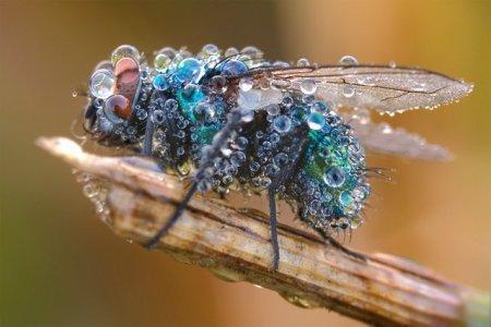 Fotos macro de insetos 01