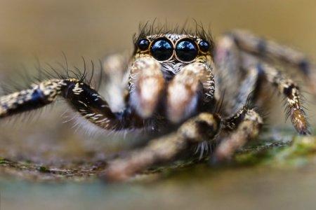 Fotos macro de insetos 02