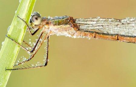Fotos macro de insetos 13