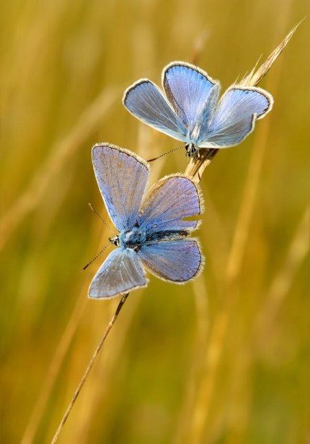 Fotos macro de insetos 04
