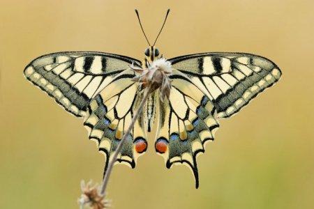 Fotos macro de insetos 08