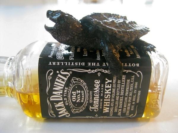 Tartarugas são alcoólatras?