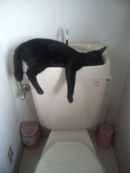 gatos-mortais10