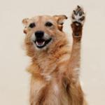 Simpatia de cachorro