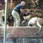 Turista Flagra Leão Atacando Seu Treinador