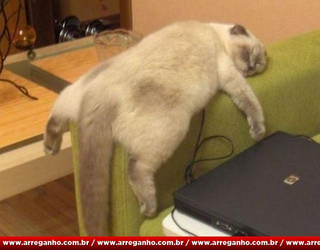 10 provas de que gatos são mais preguiçosos que você